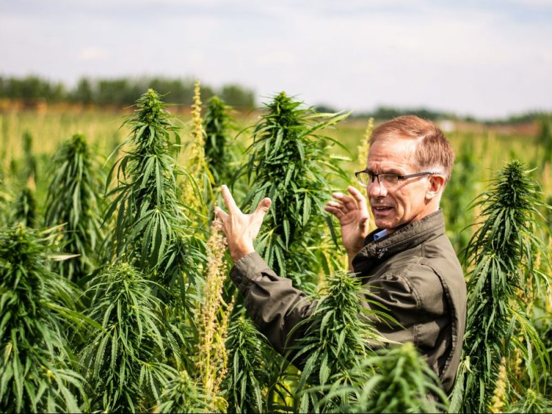 Danny Fieldberg dans ses champs de chanvre près de Medicine Hat.  Crédit photo Invest Medicine Hat.