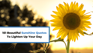 151 Beautiful Sunshine Quotes To Lighten Up Your Day