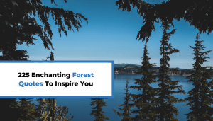 225 Enchanting Forest Quotes To Inspire You