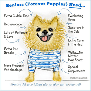 Lafs Senior Forever Puppies