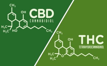 CBD and THC Differences