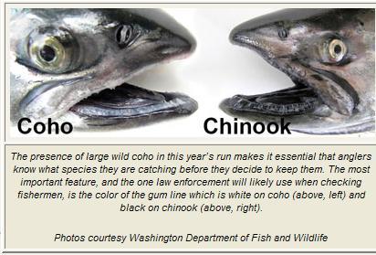 fish-comparison-odfw