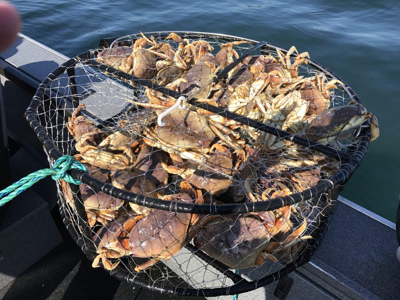 Columbia River Fishing (Crabbing) Report November 28th, 2019