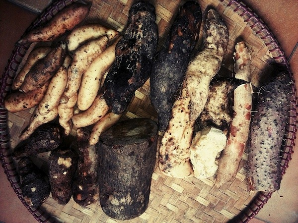 tuber root vegetables