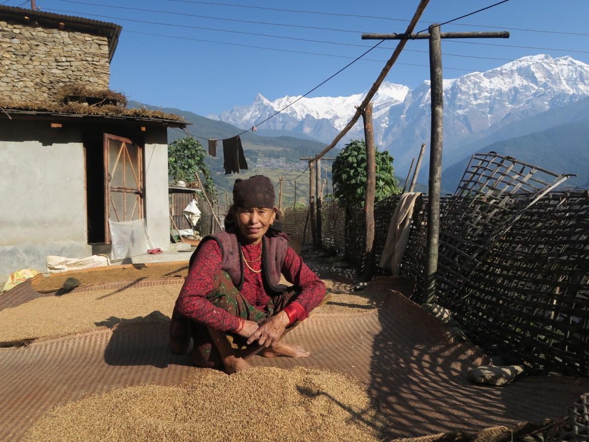 sun-drying grains