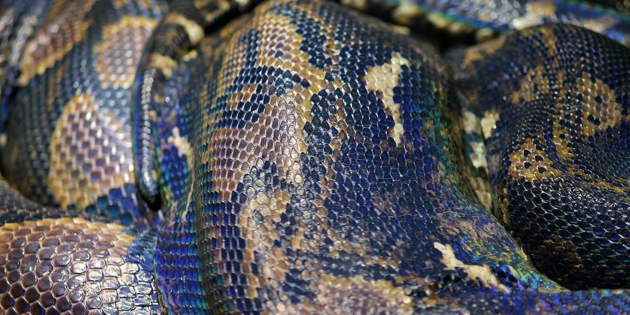 De Bijenkorf to Stop Sale of Exotic Animal Skin Products in 2020