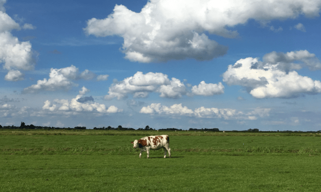 Dutch News Podcast – The Fact-Checking the Apocalypse Edition – Summer Special