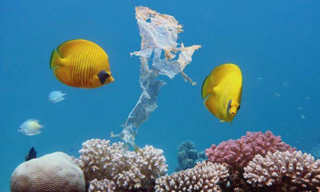 Save Our Seas Exhibition @ Musee Scheveningen