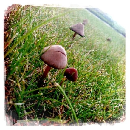 Mushrooms in Pierowall