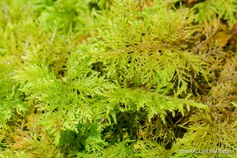 Moss - The Hall of Einar - photograph (c) David Bailey (not the)