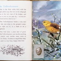 The First Ladybird Book of British Birds #1 - The Yellowhammer