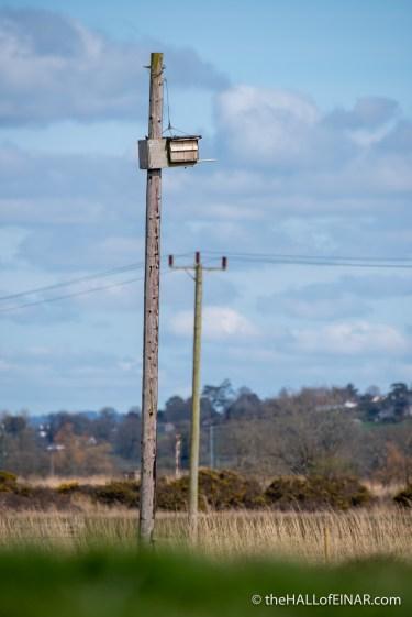 Kestrel nest box - The Hall of Einar - photograph (c) David Bailey (not the)