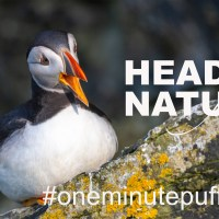 The One Minute Puffin Cure #5
