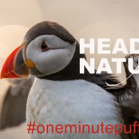 The One Minute Puffin Cure #4