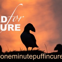 The One Minute Puffin Cure #2