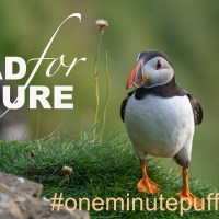 The One Minute Puffin Cure #8