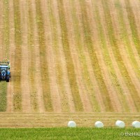 Silage and Hay