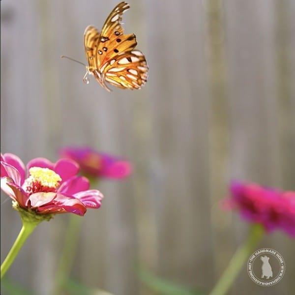 butterfly_in_garden