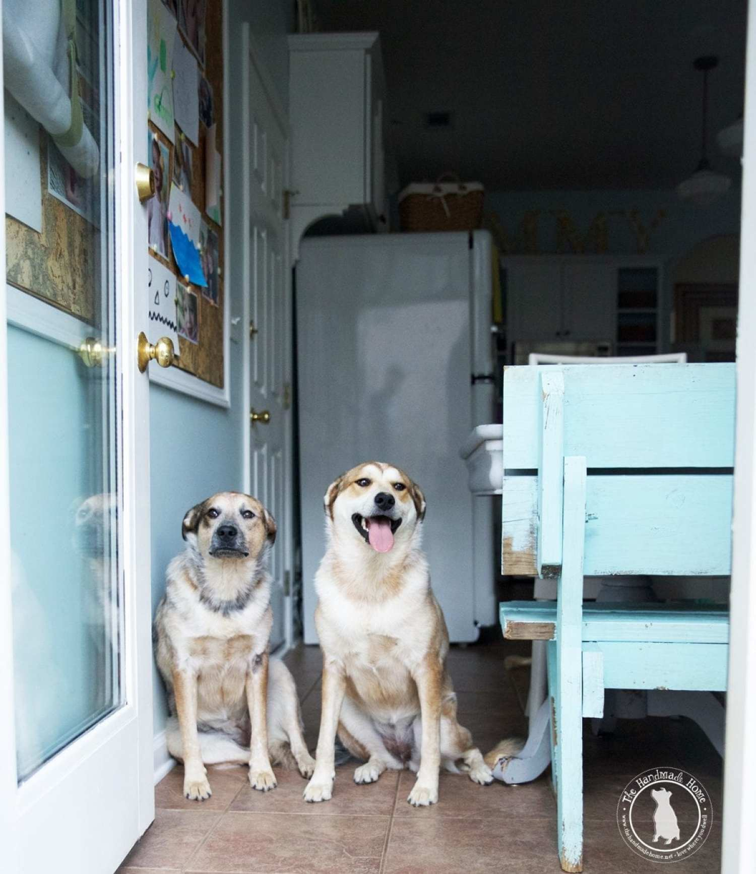 dogs_at_side_door
