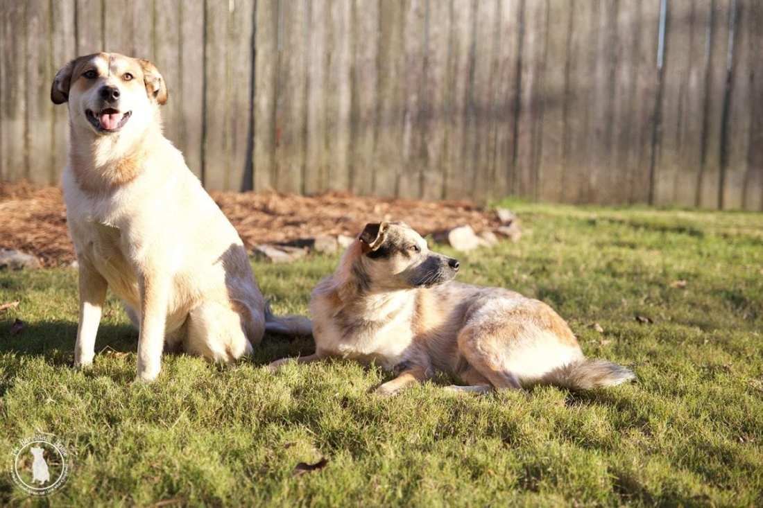 dog_posing
