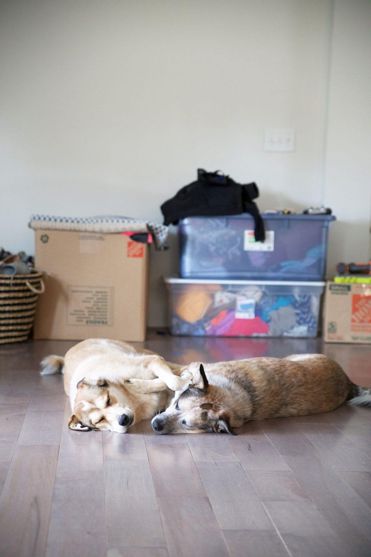 dogs_love-pergo