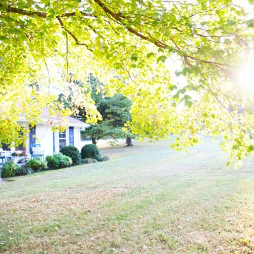how, when, and why to prune your trees