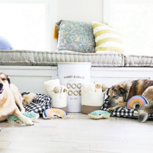 our favorite pet finds with harry barker