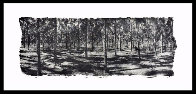 Terri Cappucci (Turners Falls, MA) Loblolly Pines Gumoil print