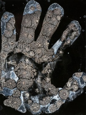 Mike Koerner (Urbana, IL) Mudras Chemigram on wet plate collodion