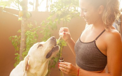 Important Tips to Keep in Mind to Find the Right CBD for Your Pet