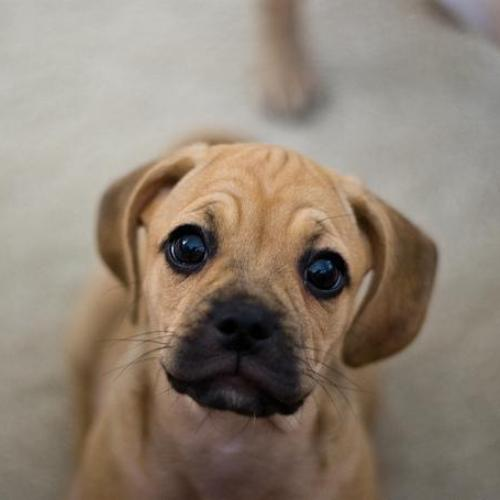 Eight Things Your New Puppy Needs | The Happy Beast