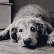 Nutrition & Exercise for Senior Dogs