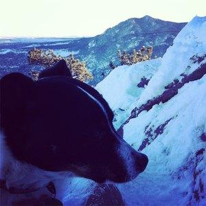 Winter Hiking Gear: Loki Dog - The Happy Beast