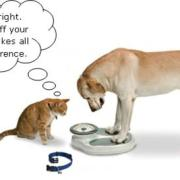 Species-Appropriate Food for Canine Weight Loss | The Happy Beast