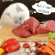 cat eating meat