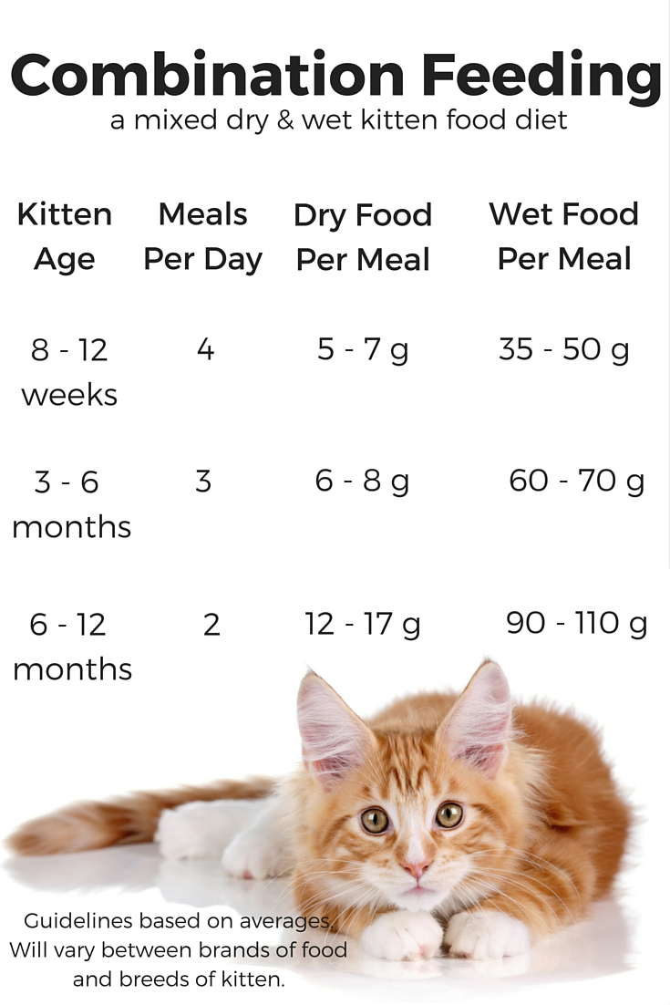 how much wet food should i feed my cat daily | Foodfash.co