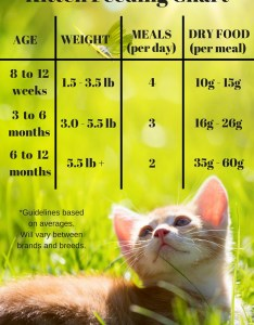 Dry kitten food chart also feeding your the happy cat site rh thehappycatsite