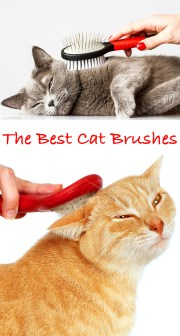 choosing cat brush and top
