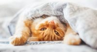 How To Stop Your Cat Peeing On Bed Covers And Pillows ...