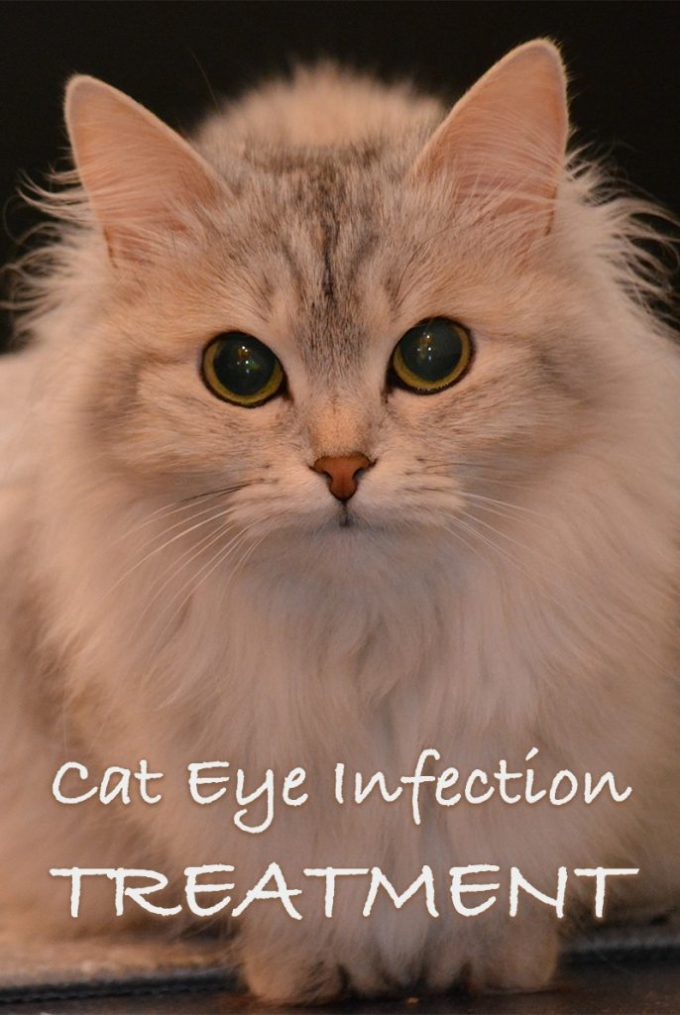 How To Put Eye Drops In Cats Eyes