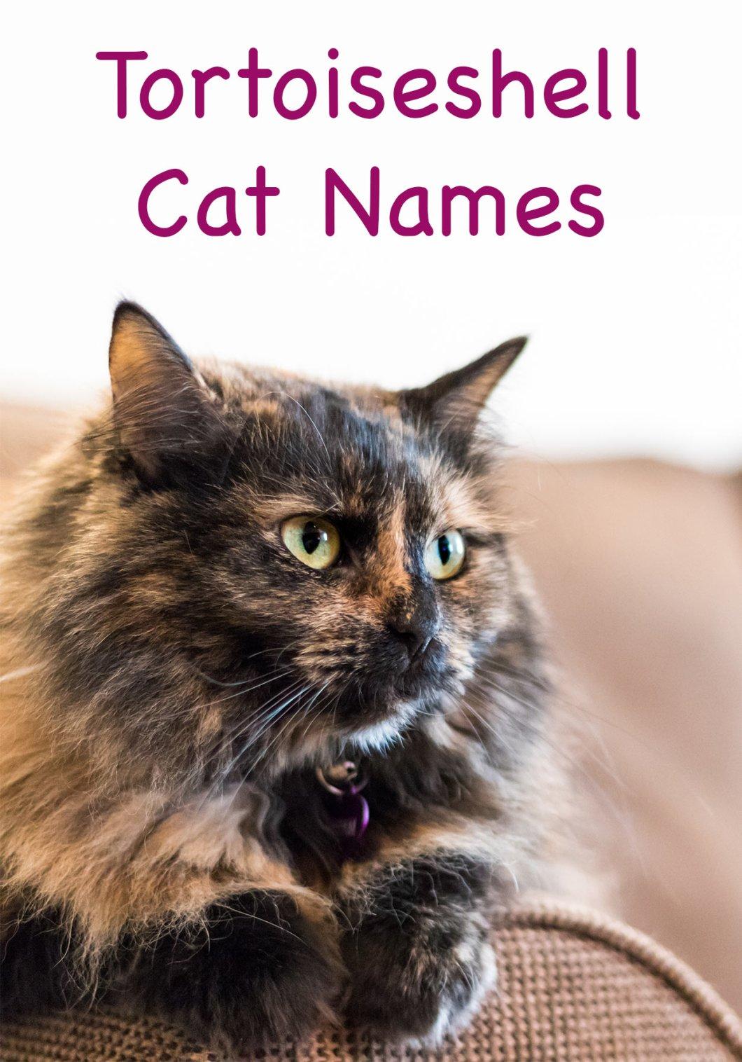 Female Cat Names Flowers | Kayaflower co