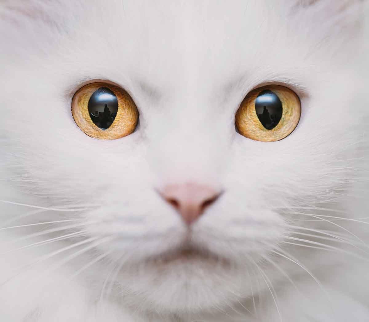 cat eye colors an