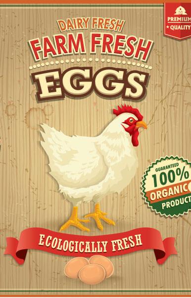USDA Announcement on Raising Chickens