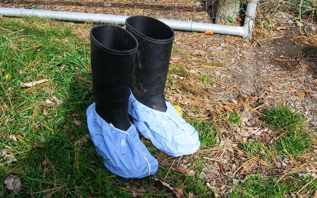 Disposable Footwear