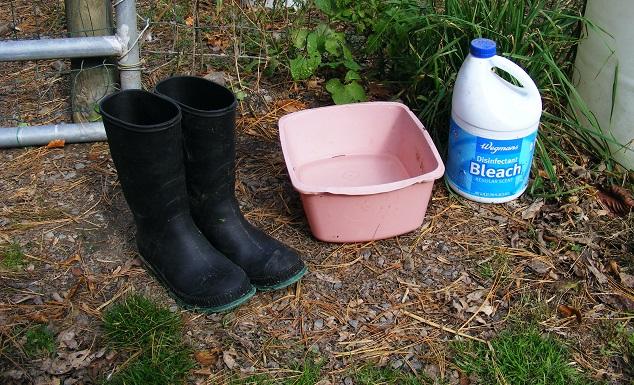 Shoe Bleaching Kit