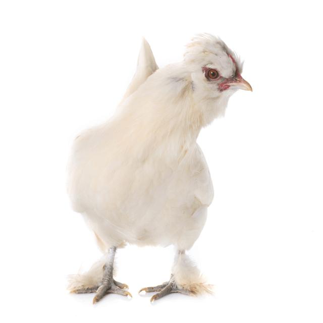 Sultan Chicken