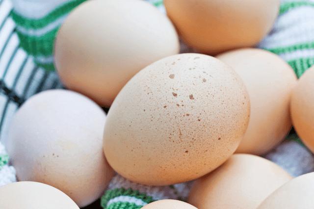 Eggs for Incubation