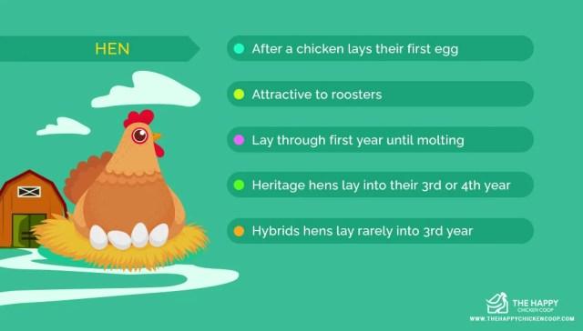 Hen or Chicken