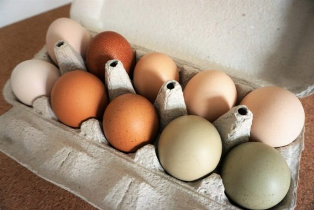 benefits of chickens to homesteading