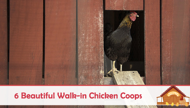 6 Beautiful Walk-in Chicken Coops